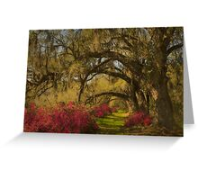 Live Oaks  Greeting Card
