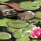 Pond-ering by Gili Orr