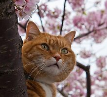 The Spring Cat by vadim19
