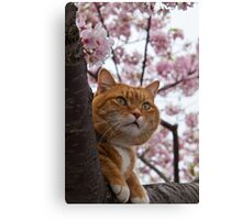 The Spring Cat Canvas Print