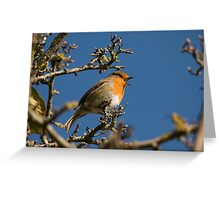 Robin singing for spring Greeting Card