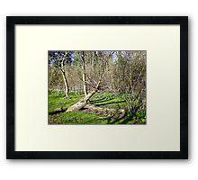Tree Sculpture in Upton Park Framed Print