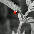 Ladybird by Stretch75