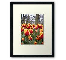 Spring tulips - Keukenhof Holland Framed Print