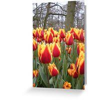 Spring tulips - Keukenhof Holland Greeting Card