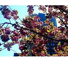 Park Avenue in bloom Photographic Print