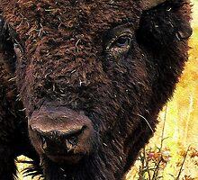 Buff by JimPavelle