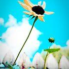 Summer by Ashlee Lauren