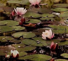 The lily pond. by Dominic Moriarty