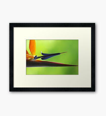 The Bird's Spear Framed Print
