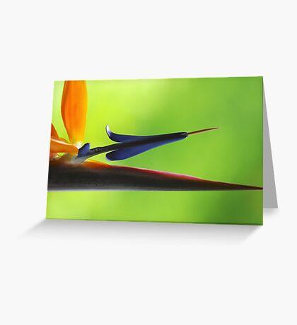 The Bird's Spear Greeting Card