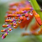 Natures Sparkling Jewels by WOBBLYMOL