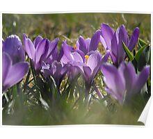 Sweet Spring Fling Poster
