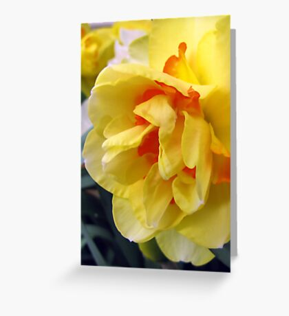 Blissful Greeting Card