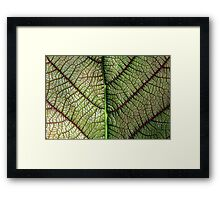 Natural Streets and Avenues Framed Print
