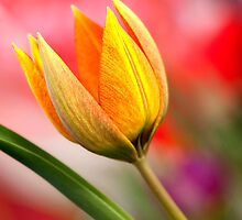 Spring Colors by Claudia Kuhn