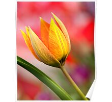 Spring Colors Poster