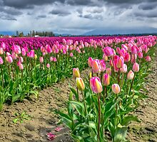 Purple and Pink by Bryan Peterson