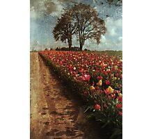 Tulip Fields Photographic Print