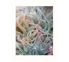 sea plant...(under the water)! Art Print
