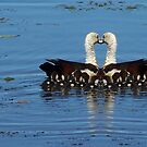 Mother Swan..Mirrored by judygal