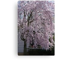 The Weeping Cherry Tree..... Canvas Print