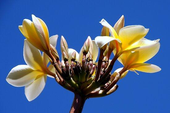 Welcome Flowers by Sean Jansen