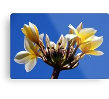 Welcome Flowers Metal Print