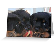 "Rottweiler ""Three Way Tie"" Greeting Card"
