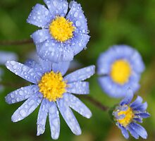Blue & Yellow after the rain; Wat Garden, La Mirada, CA USA by leih2008