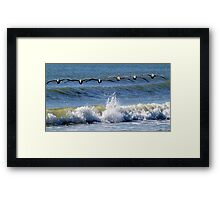 Pelicans in search formation...looking for their breakfast Framed Print