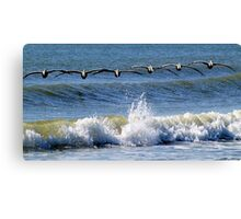 Pelicans in search formation...looking for their breakfast Canvas Print