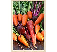 Harvest Organic Vegetables Photographic Print
