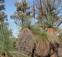 Victorian Forest of Grass Trees by DianneLac