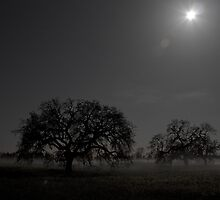 3 AM in Sonoma County by R3photography