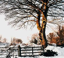 Snow and sunshine by Agnes McGuinness