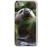 Southern Elephant Seal in the Tussock Grass, Macquarie Island  iPhone Case/Skin