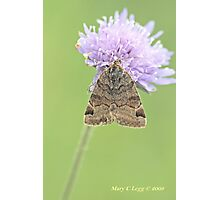 Burnet  Companion, Euclidia glyphica Photographic Print