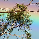 Birds come out after the rain by Julie Sleeman
