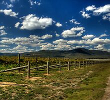 Vineyard and the mountains by Madhusudan