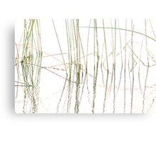 Reeds Canvas Print