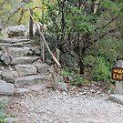 Maple Trail by Vivian Sturdivant