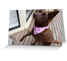 Bandana Dog Greeting Card