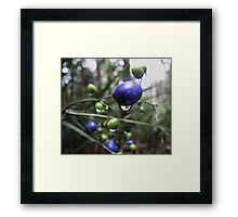 Brightly coloured berries  Framed Print