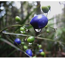 Brightly coloured berries  Photographic Print