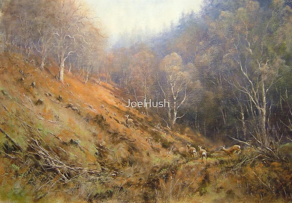 Holystone Forest, Northumberland, England by JoeHush