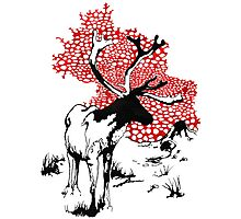 Reindeer drawing Photographic Print