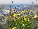 bay view through wildflowers by Julie Sleeman