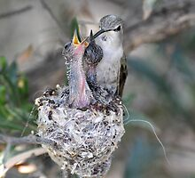 The Hummer Family  by Judy Grant