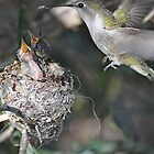 Momma Hummer Hovering  by Judy Grant